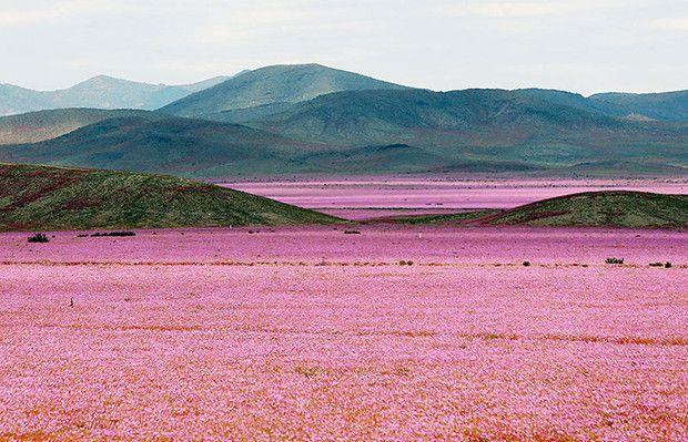 Isso é o que acontece quando a chuva cai no Atacama, o deserto mais seco do planeta - Follow the Colours