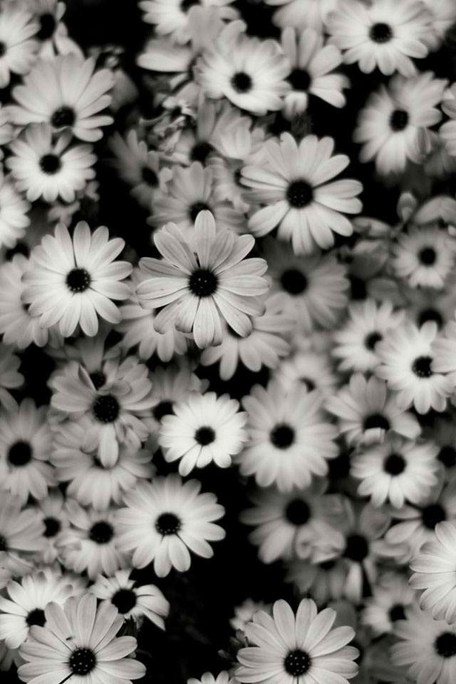 white and black flower wallpaper:)