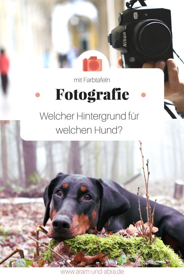 Fotografie, Hund, Welche Farbe passt?