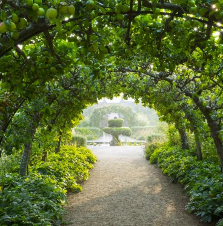 ESPALIER APPLE TREE TUNNEL, Highgrove, Gloucestershire
