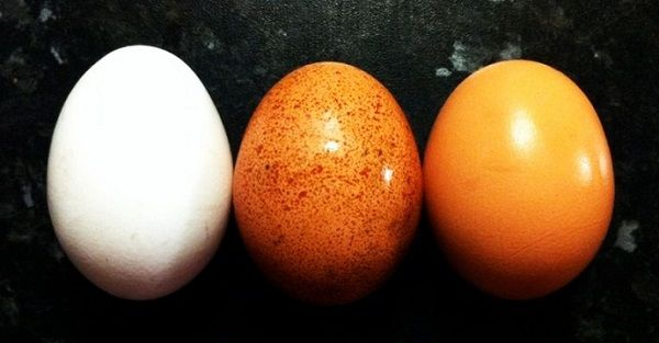 WHY CHOLESTEROL IN EGGS IS HARMLESS AND 4 OTHER REASONS TO EAT THEM DAILY