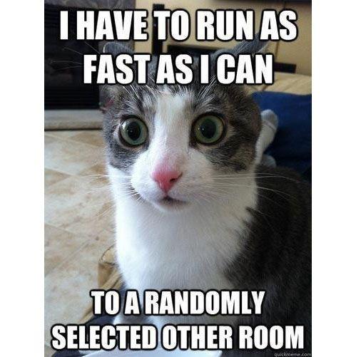 Epiphany Cat