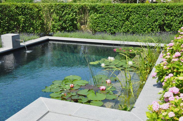 Referenzen Gartengestaltung: Wunderschöner Design-Schwimmteich in einem Privatgarten. Bepflanzte Regenerationszone für natürlich sauberes Wasser.