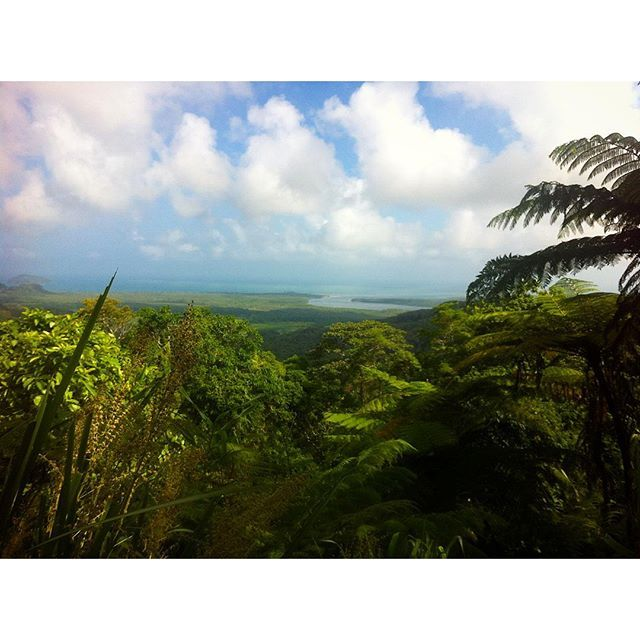 Spend an afternoon driving through the Daintree Rainforest to Cape Tribulation #thisisqueensland by @kayleigh674