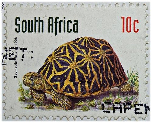 Suid-Afrikaanse posgeld met 'n skilpad.