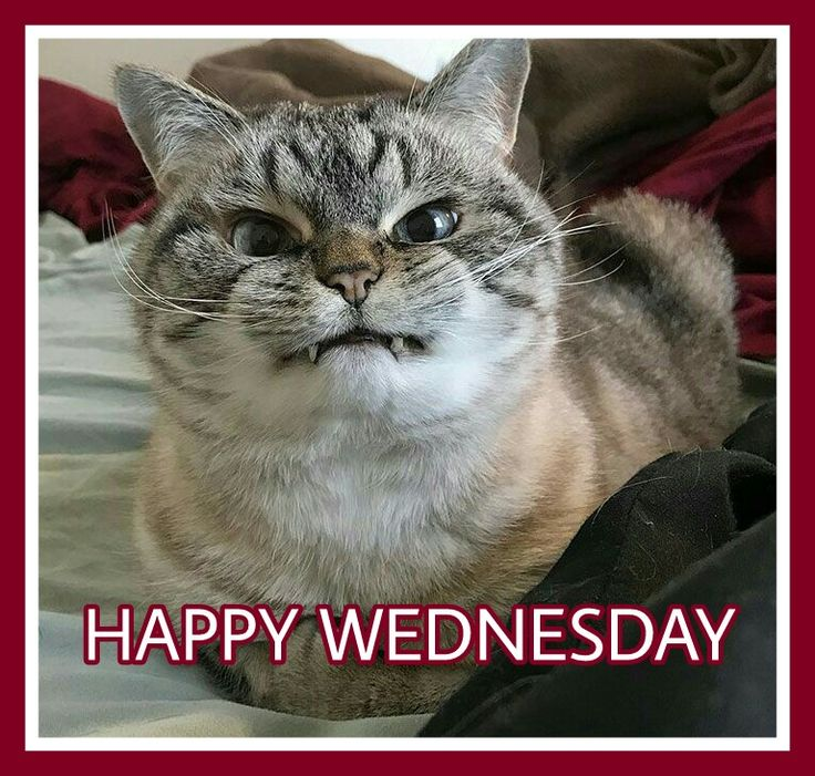 78 best Happy Wednesday images on Pinterest