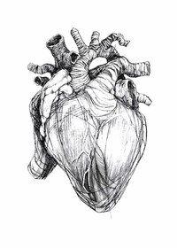 человеческое сердце - Поиск в Google