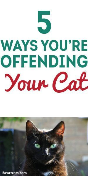 5 Ways You're Offending Your Cat