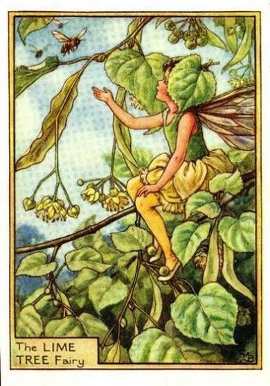 Lime Tree Flower Fairy » Flower Fairy Prints- Vintage Fairy Prints by Cicely Mary Barker