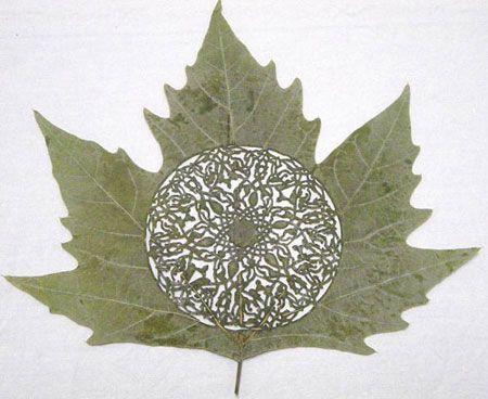 designed leaves
