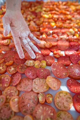 The legendary sundried tomatoes of Santorini Island, Greece, on the making. #red #vegan #photography