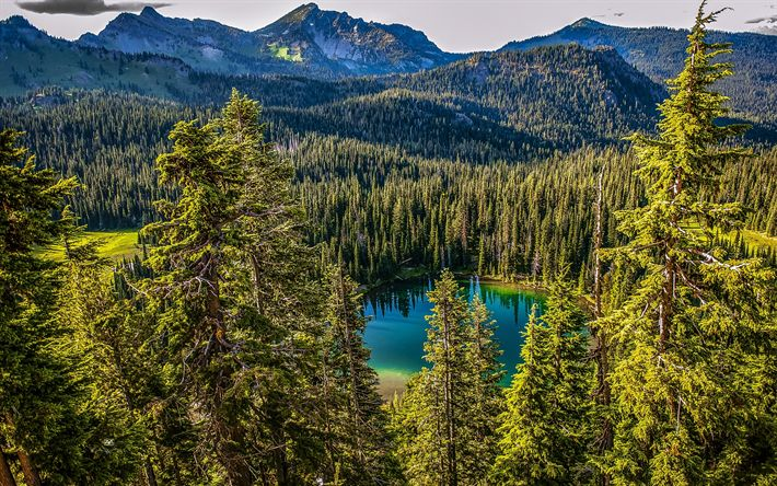 Descargar fondos de pantalla Lago del bosque, montañas, bosque, montaña, lago, Parque Nacional Monte Rainier, Pearce County, Estados unidos, Washington