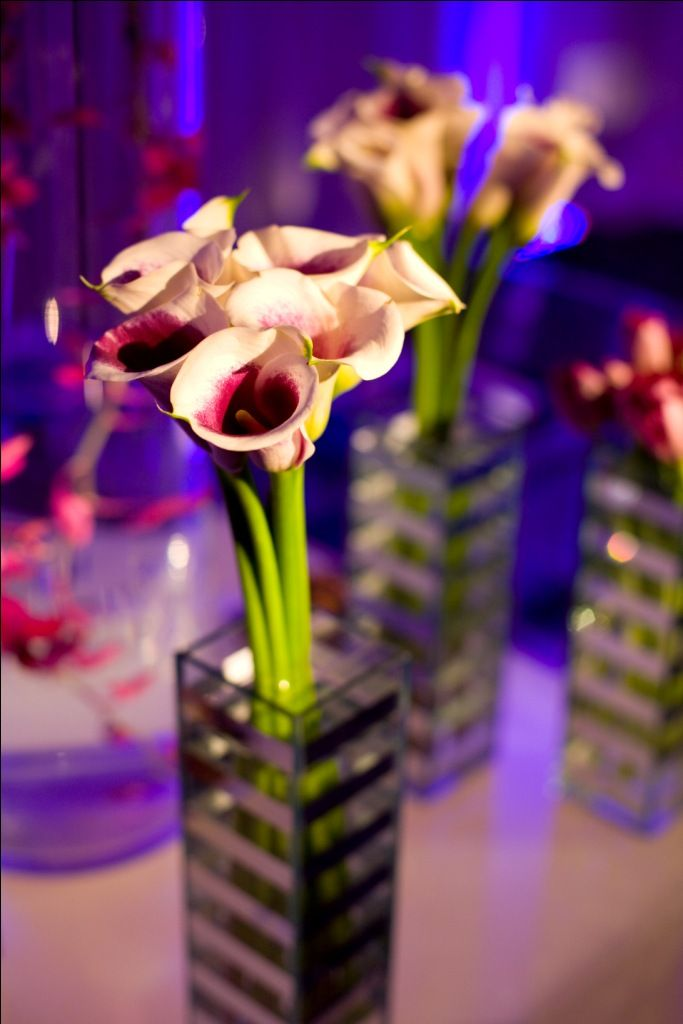 Image detail for party photo gallery orchid