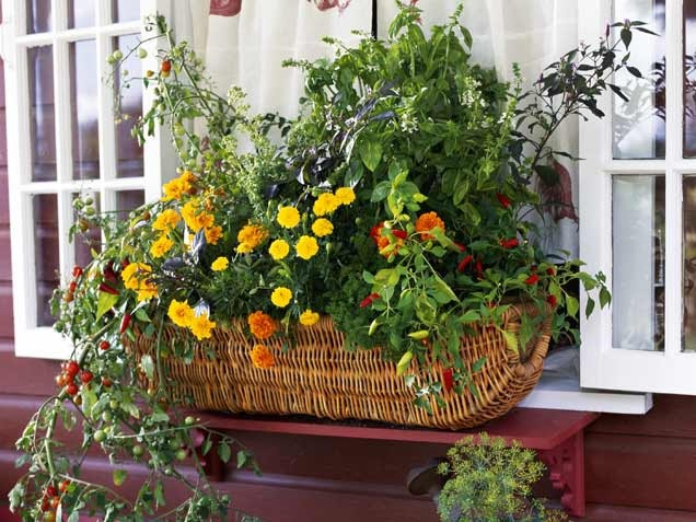 Spice Up Your Window Box with a Pico de Gallo Garden