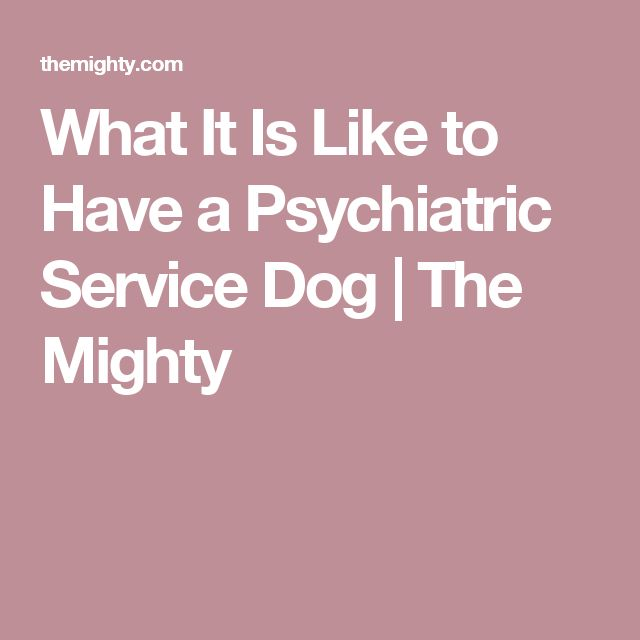 What It Is Like to Have a Psychiatric Service Dog | The Mighty