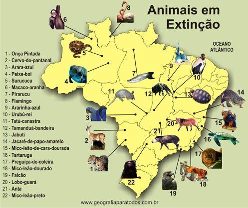 Animais Em Extincao Com Imagens Animais Em Extincao Animais