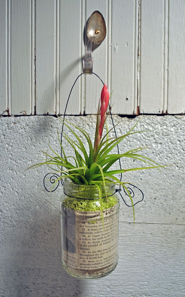 hutch studio: Hanging Air Plants