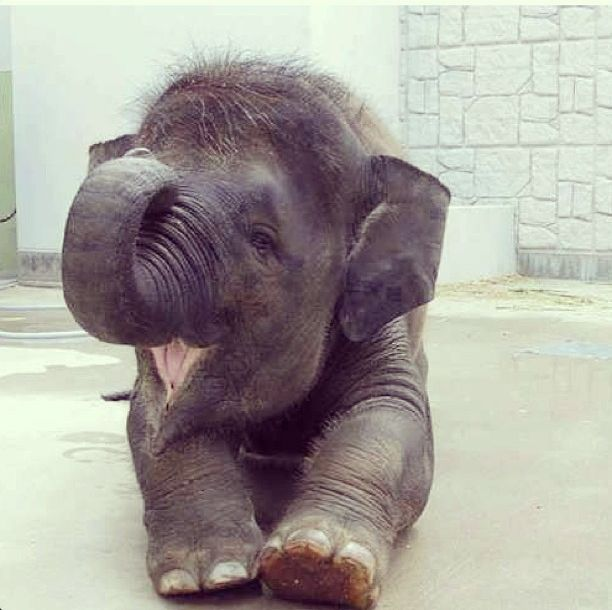 such a happy baby elephant. it's smiling! :)