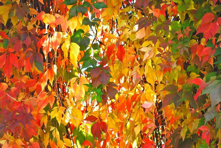 Autumn Drape | by littlekiss☆
