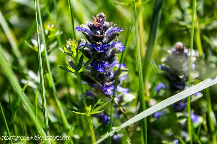 Cobalt somewhere in grass