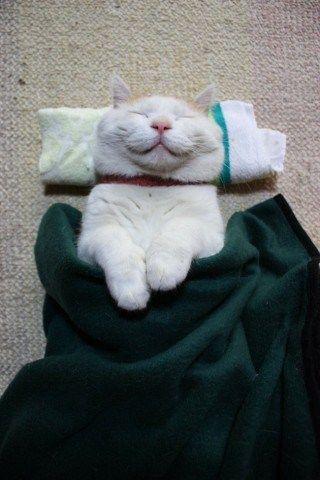 20 Foto Kucing Lucu Sedang Bermalasan, Sungguh Menggemaskan!  Sumber : http://www.wokeeh.com/hiburan/foto-kucing-lucu-bermalasan/