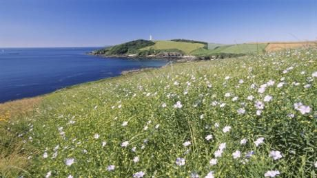 A view of Gribbin Head, taken from Coombe © David Noton