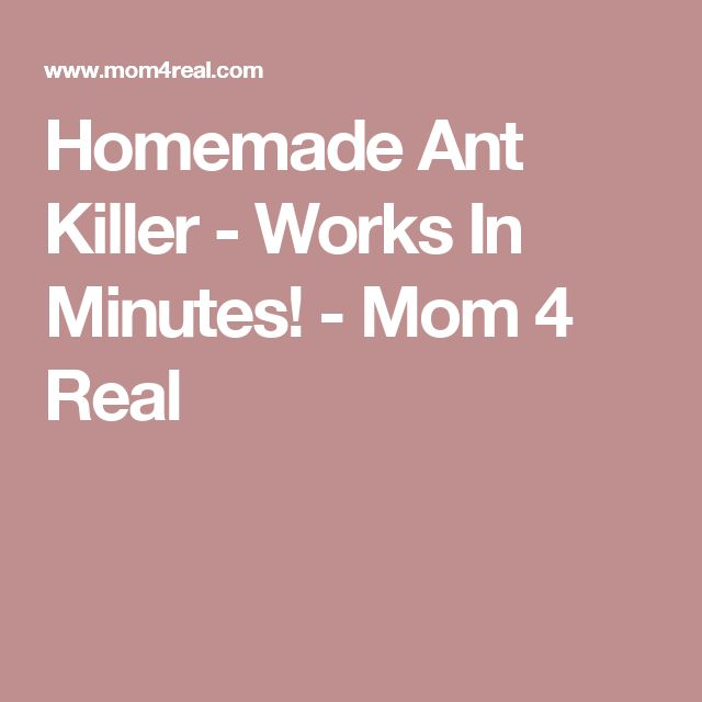 Homemade Ant Killer - Works In Minutes! - Mom 4 Real