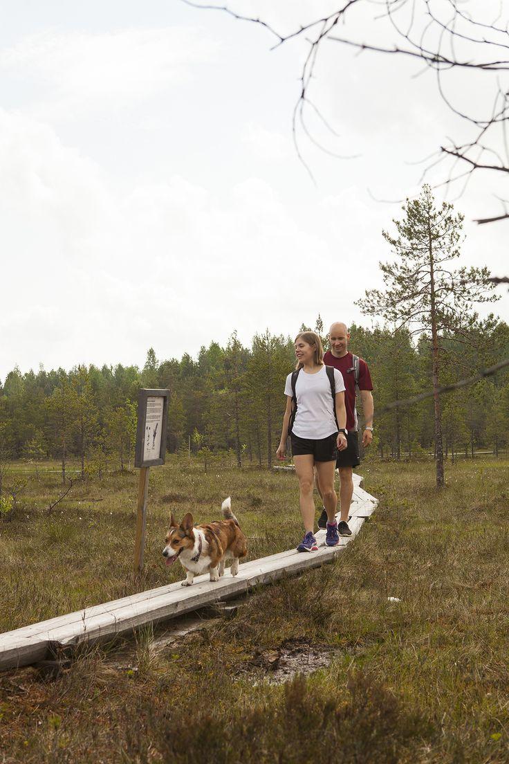 Hatlamminsuon pitkospuilla, Riihimäki. Kuva: Tapio Aulu