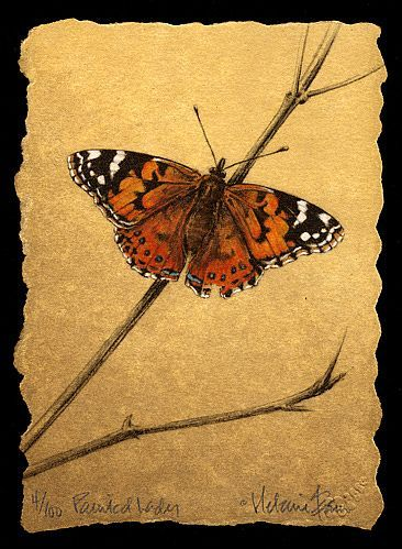 Realistic butterfly paintings - photo#37