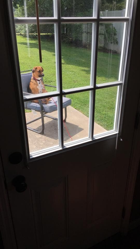 Took her outside for a potty break. Checked on her a minute later and found her like this. http://ift.tt/2s1FFxr #lol #funny #rofl #memes #lmao #hilarious #cute