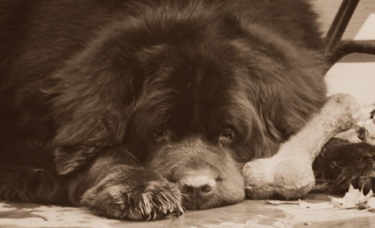 A Mysterious Dog Illness Moving Through Ohio Has Me Concerned - mybrownnewfies.com