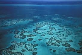 belize reefs