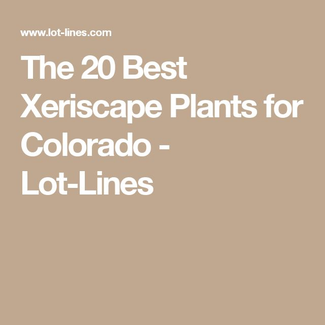 The 20 Best Xeriscape Plants for Colorado - Lot-Lines