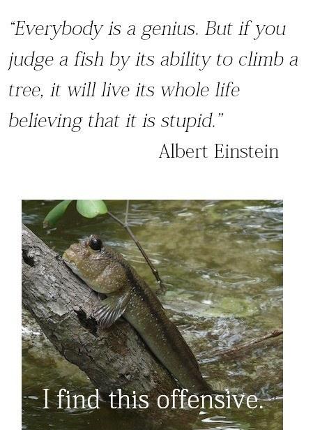 albert einstein quote - genius - meme - lol - meme - fish