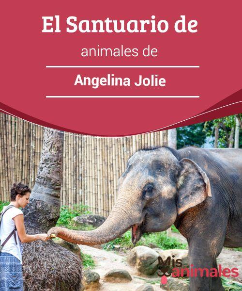 El #Santuario de animales de Angelina Jolie  Es una de las #noticias mediáticas más destacadas de las últimas semanas. #Angelina #Jolie inauguró oficialmente un Santuario de #Animales en Namibia, al suroeste de África.