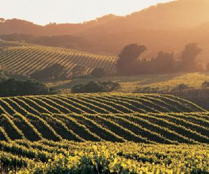 En el región de Valle de Guadalupe, son viñedos. Es un región con muchos viñedos y es famoso para su vino. Es similar a la valle Napa en California, EEUU.    ¡Es un destino popular para turistas y el vino es muy bueno y rico!