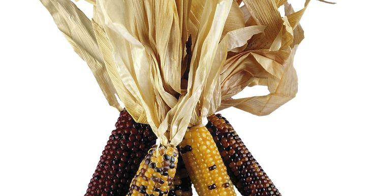 Artesanías con hojas de maíz. Las hojas de maíz son las hojas externas que protegen un choclo mientras crece. Cuando una mazorca está lo suficientemente madura para comer, debes pelar las hojas para llegar a los granos amarillos del maíz. Cuando las mazorcas pierden la mayoría de su humedad luego de que el choclo madura, se vuelve de color tostado claro. Embeber las hojas de ...