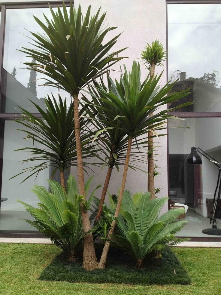 M s de 25 ideas fant sticas sobre jardines tropicales en for Planta yuca exterior