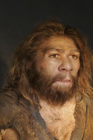 Recent Sightings of Neanderthals — scientific reconstructions (August 2011)