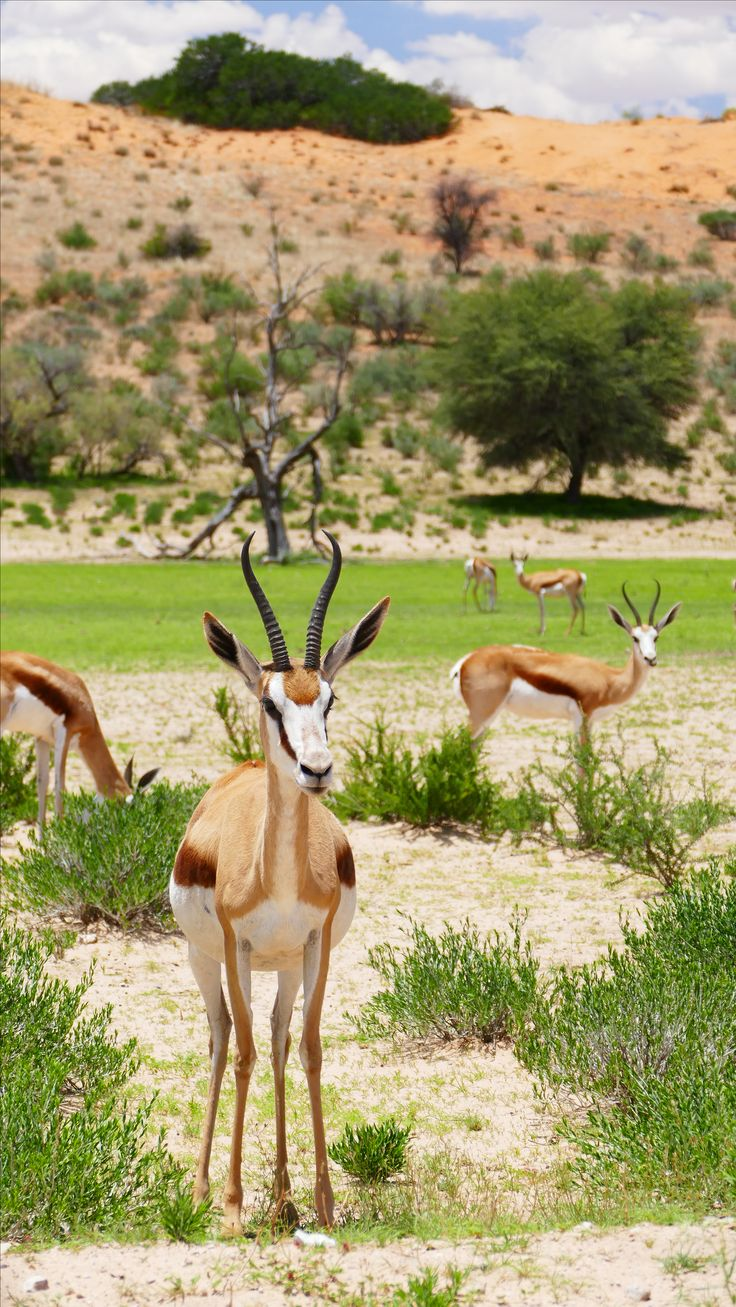 It's been raining in the #Kalahari #travel #Namibia #wildlife