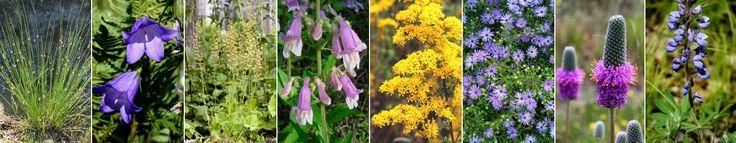 Wild Ones Twin Cities Minnesota: Plant Sale