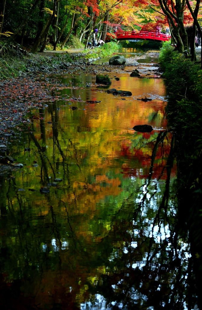 Autumn Leaves by tomcat on PHOTOHITO