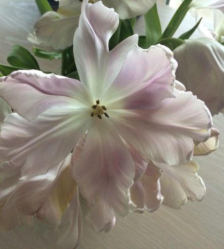 "Interiør-tulipaner ""Air"""