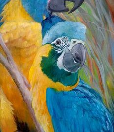 Blue throated macaw - Kitty Harvill for Draw a Bird Day | MimsHouse.com