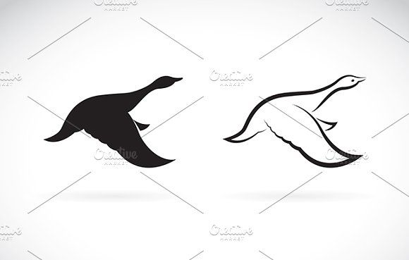 Vector image of an flying wild duck by yod67 on @creativemarket
