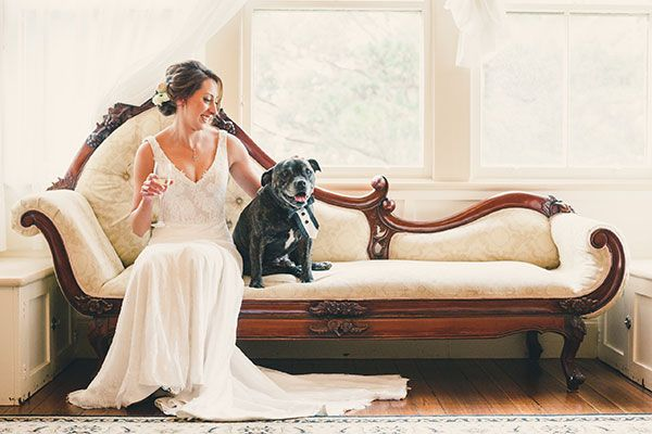 Pets at weddings? Yes please!