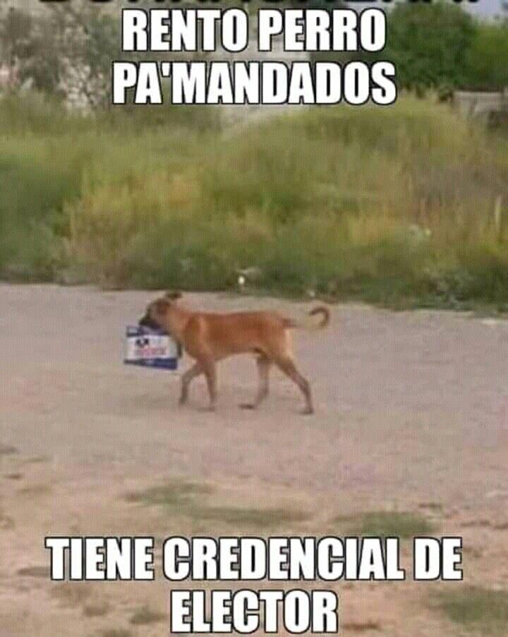 Pin De Eli Lopez En Firulais Funny Perros El Humor Borrachos