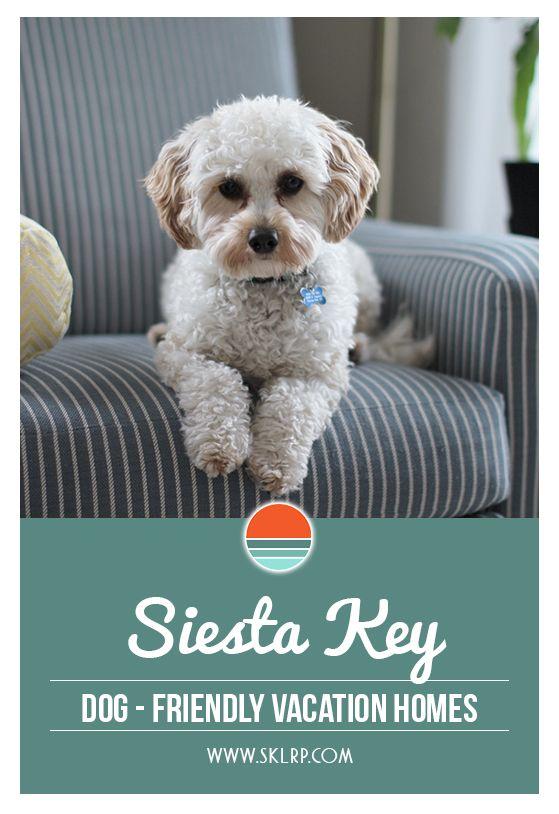 Dog Friendly Siesta Key Vacation Rentals Dog Friendly Vacation Dog Friendly Rentals Dog Friends