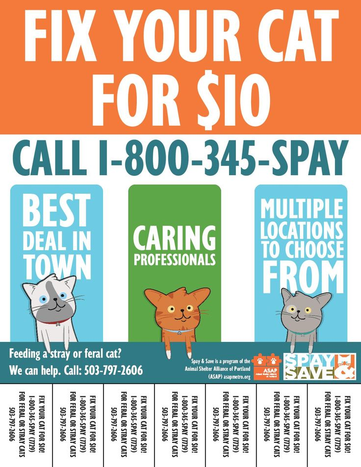 Spay & Save lowcost spay/neuter for cats in the greater