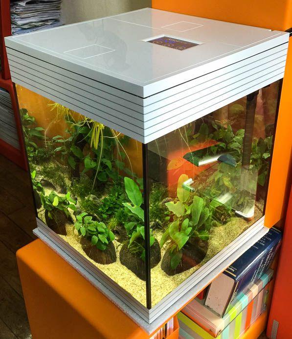 Nouvel aquarium pour remplacer un nano aquarium http://www.pariscotejardin.fr/2016/07/nouvel-aquarium-pour-remplacer-un-nano-aquarium/